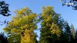 Der Kobernaußerwald – ein Naturjuwel