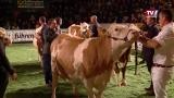 FIH feiert das Fest der Kuh