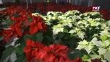 Spaziergang durch den Advent - Trends von Gartengestaltung Blumenhaus Mayer