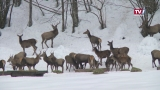 Wildtierfütterung in Grünau - nach und nach kommen Sie aus dem Wald