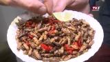 Insekten essen?