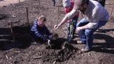 LINZ AG Baumpflanz-Aktion im Wasserwald