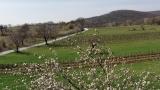 Weinfrühling Neusiedler See