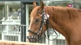 122. Pferdemarkt in Schwanenstadt