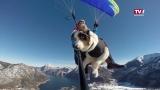 Fliegende Hunde - Buddy und Zoe gehen Paragleiten