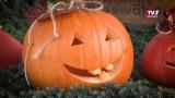 Herbstfest im Herzen der Stadt