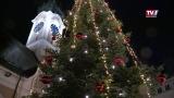 Der Christbaum leuchtet am Grieskirchner Weihnachtsdorf
