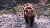 Frühlingserwachen im Cumberland Wildpark
