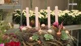 Blumentipp der Woche - Adventkranzbinden