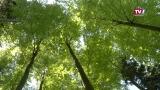Projekt Waldraum