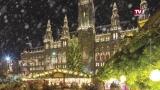 OÖ Christbaum für Wiener Rathausplatz
