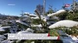 Christbäume vom Forsthof Eder: Frischer geht's kaum