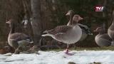 Lockdown-Auswirkungen - auch bei Tieren? Besuch im Cumberland Wildpark