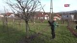 Baumschnitt Kurs mit Klaus Strasser