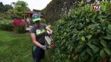 Gartengestaltung | Maschinenring