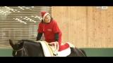 Heilender Pferderücken - Therapiereiten am Bartlgut