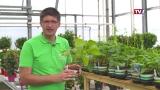 Gartengenusstipp - Hülsenfrüchte