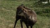Wildpark Cumberland – Frühlingserwachen – BTV Tiere