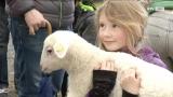 Quicklebendig am Schafbauernmarkt in Schalchen