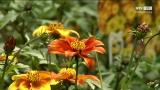 Gartentipp – Balkonblumen