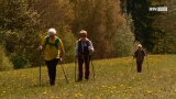 Einzigartiger Naturerlebnisweg am Gmundnerberg eröffnet!
