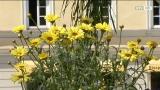 Landesgartenschau - der Sommer hält Einzug...