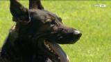 Die besten Schäferhunde der Welt in Regau