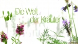 Der Kren - eine gesunde Heil- und Gewürzpflanze!