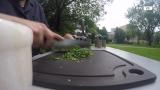 Die Petersilie - eine wertvolle Heilpflanze