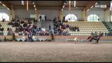 Temperament, Anmut und Stolz – Shaqya Araber Europachampionat  im Pferdezentrum Stadl-Paura