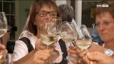 In vino veritas - auch beim Vinum in Vöcklabruck?