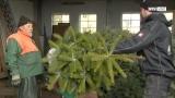 Christbäume Eder