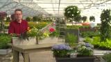 Blumentipp der Woche - Blumen Nussbaumer