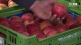 Frisch & Knackig - Früchte Aumayr