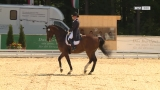 Pferdesport-Turnier in Ranshofen