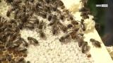 LINZ AG Pilotprojekt: Bienen liefern LoRaWAN-Daten