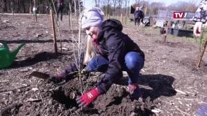 Kinder und Jugendliche pflanzen 500 Bäume im Wasserwald Linz