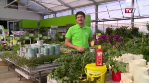 Gartengenusstipp - Tomaten