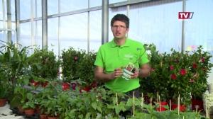 Gartengenusstipp Blumen Mayer