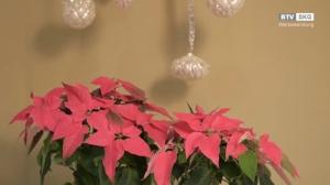 Zaubern Sie Adventstimmung in Ihre Küche!