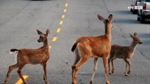 Wildunfälle – Tipps damit es nicht soweit kommt!
