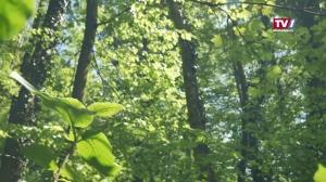 So wichtig ist der Wald für OÖ
