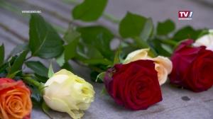 Rosen aus Frankenmarkt, im Geschenks Paket versandt.