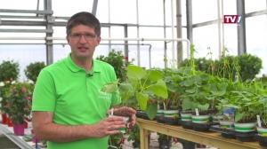 Gartengenusstipp Blumenhaus und Gartengestaltung Buttinger
