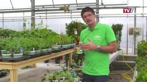 Gartengenusstipp Christoph Buttinger - Melanzani & Melone