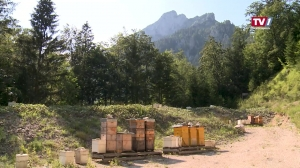 Bienenzucht am Traunstein