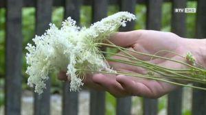 Mutter Natur bietet so vieles! Kräuterwanderung im Kurpark Bad Schallerbach