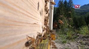 Bienenzucht am Traunstein