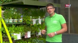 Gartengenusstipp mit Christoph Buttinger