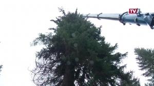 Ein Baum für die Wiener